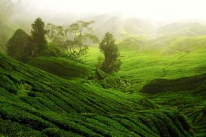 29: All Natural Landscape