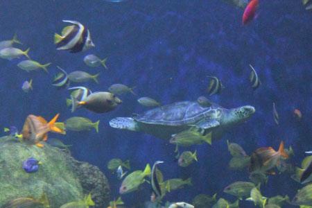 35: Two Set Sea Life